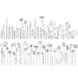 drawing herbs and flowers vector image vector image