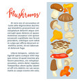 ripe forest mushrooms of all edible species vector image