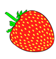 strawberry on white background of vector image