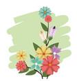 flowers bunch nature spring petal design vector image