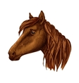 Brown graceful horse with sad eyes portrait vector image vector image