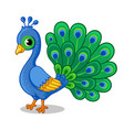 cute beautiful blue peacock on a white background vector image vector image