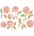 floral rose vector image vector image