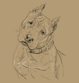 monochrome american staffordshire terrier hand vector image vector image