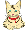 Tabby cat vector image