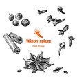 winter spices hand drawn vector image