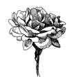 rose flower doodle hand drawn vector image