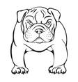 angry bulldog vector image vector image
