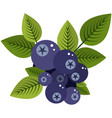 blue bilberries bunch with leaves flat icon vector image