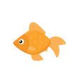 cute goldfish icon vector image