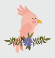 cute pink bird in branch with flower vector image