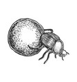 dor bug beetle engraving vector image