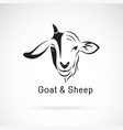 goat face and sheep face on a white background vector image vector image