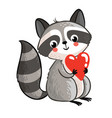 isolated raccoon holding in hands heart vector image vector image