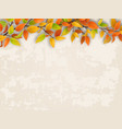 tree branch on old plastered wall background vector image vector image