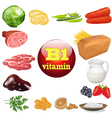 vitamin b one in plant and animal vector image vector image