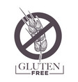 gluten free products poster with wheat vector image vector image