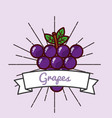 grapes fruit organic vitamins emblem vector image vector image