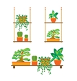 Green Plants Shelves for Home or Office