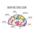 human brain functional scheme vector image