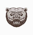 grizzly brown bear screaming mad animal vector image