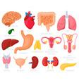 human internal organs cartoon organs heart