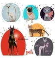 set with pets vector image vector image