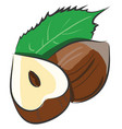cartoon of a hazelnut cutted in a half with a vector image vector image
