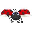 Cute ladybug cartoon flying vector image vector image