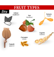 Types of simple fruit vector image vector image