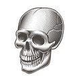 a black and white skull vector image vector image