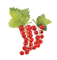 red currant vector image vector image