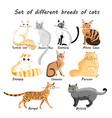 set cat breeds vector image