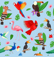 tropical birds jungle summer seamless vector image
