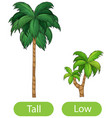 opposite words with tall and low vector image vector image