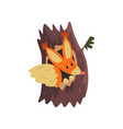 cute squirrel sitting in hollow of tree hollowed vector image vector image