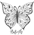 ornamental hand drawn sketch butterfly abstract vector image