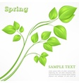 Spring branch with green vector image vector image