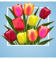 tulip flower design background floral card art vector image vector image