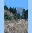 view on hill with dry grass and coniferous vector image