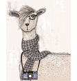 Cute hipster lama with photo camera glasses vector image