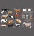 cattle breeding infographic template flat design vector image vector image