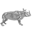 engraving of rhinoceros skeleton vector image vector image