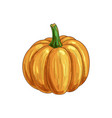 orange pumpkin with stem isolated raw gourd squash vector image vector image