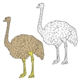 Sketch big ostrich standing on a white background vector image