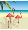 Two flamingo birds at Tropic Beach vector image vector image