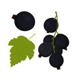 currants on white vector image vector image