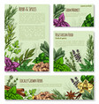 herb and spice sketch banner of natural seasoning vector image vector image