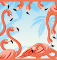 pink flamingos on a blue background vector image