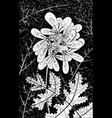 coriander - flower black and white vector image vector image